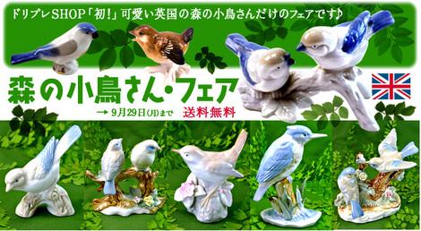小鳥本番-14-9-26.jpg