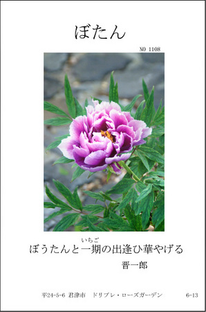 1108-ぼたん.jpg