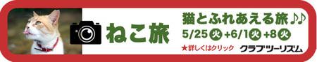 2021-5ねこ旅-.jpg
