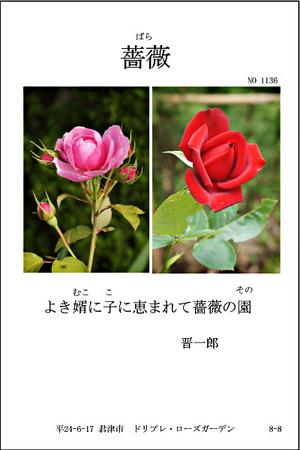 ++1136-薔薇.jpg