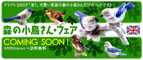 小鳥-14-9-26-.jpg