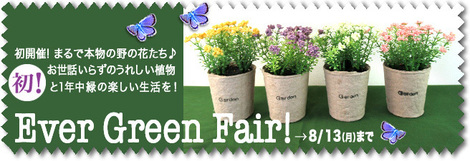 Ever-Green-FF--2018-8.jpg